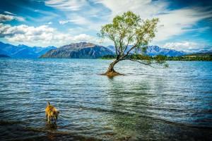 瓦納卡湖3